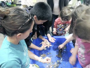 Children enjoying the touch tank
